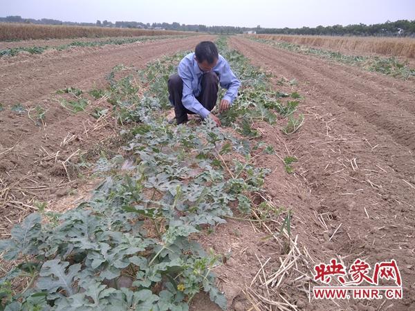 挖掘板店乡产业特色和优势 助农户大力发展西瓜产业