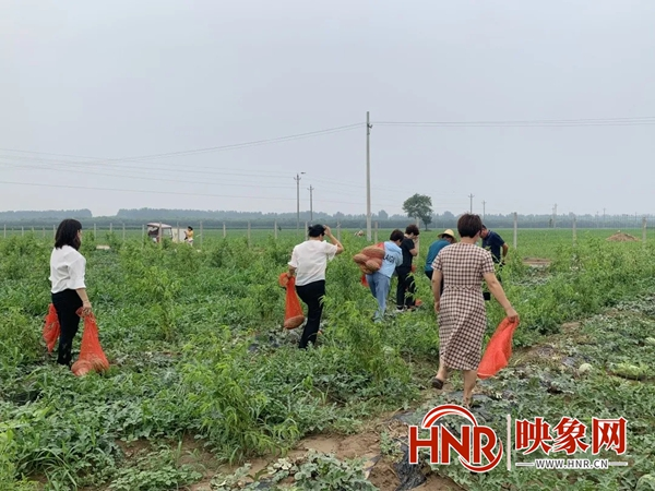 """长垣市西陈村:西瓜采收""""尝甜头"""" 农户致富有奔头"""