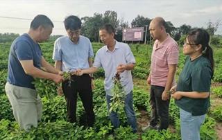 罗山县花生种植正值关键期 省专家来支招