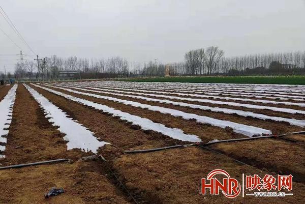 宝丰县杨庄镇:甘蔗种植甜了幸福生活