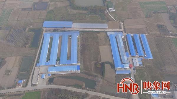 淮滨:智能化养殖专业合作社 拓宽群众致富路