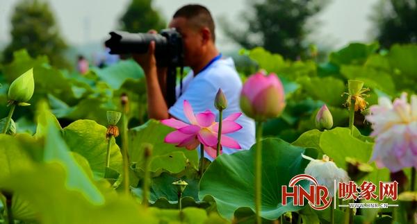 2021年淮阳龙湖赏荷旅游月将于7月9日盛大启幕