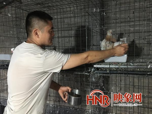 临颍县时陆明:饲养观赏鸽走上致富路
