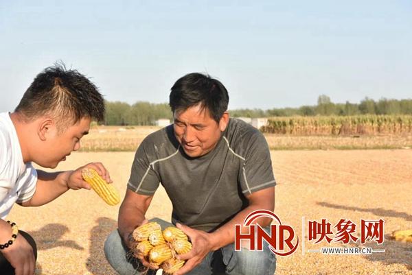 平舆县:金秋喜迎丰收季 遍地撒满黄金珠