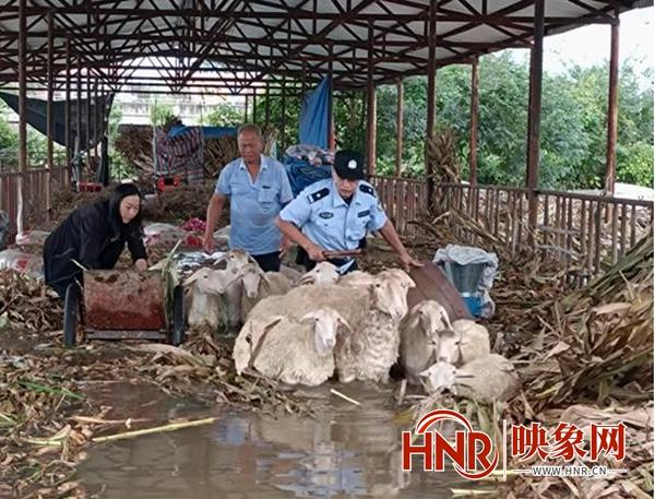 洪水来袭 南阳公安民警用铲车成功营救养殖户和山羊