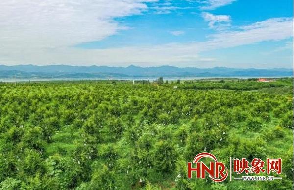 淅川县推行产业结构优化升级 奏响转型发展强音