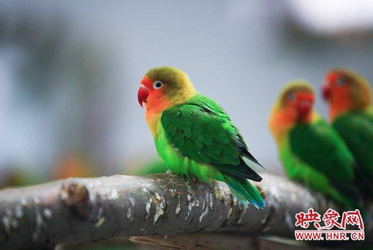 热热闹闹过新年! 郑州市动物园万只鹦鹉等您来