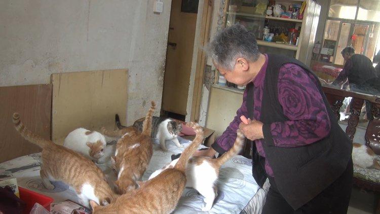 78岁老人用退休金救治残疾、流浪猫,把失宠小动物当孩子养