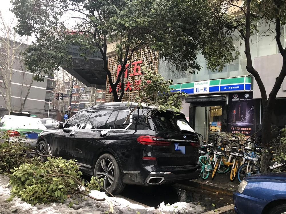 一夜暴雪,多辆汽车街头被树木砸伤,保险公司赔吗?